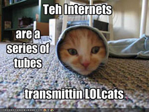 internet_cat